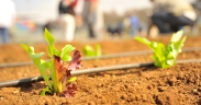 New AgTechHub launched for Queensland farmers